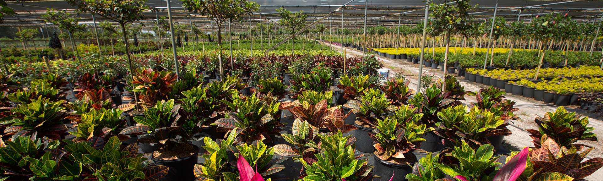 Market Category Page - Outdoor Nurseries