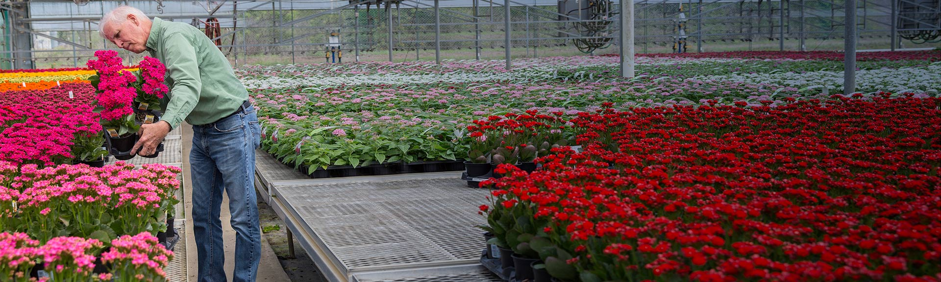 Market Category Page - Indoor Greenhouses