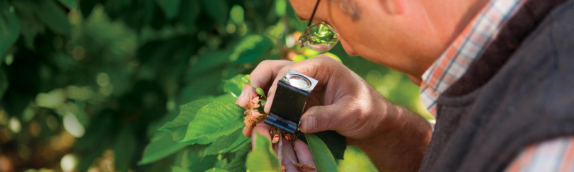 Sultan™ Miticide | BASF Ornamental Plant Care Products for